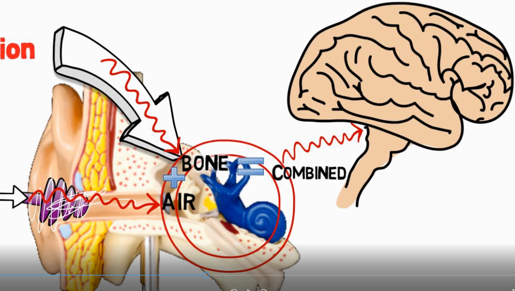 """How Hearing Works and the """"Science"""" of How it is impossible"""